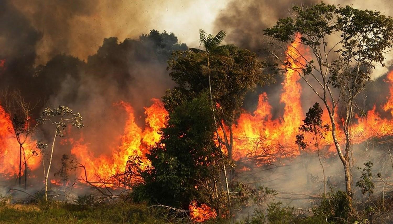 حرائق الغابات قد تساهم في انتشار عدوى الأمراض
