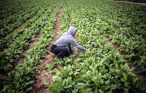 ظاهرة زراعية غريبة في تركيا ؟